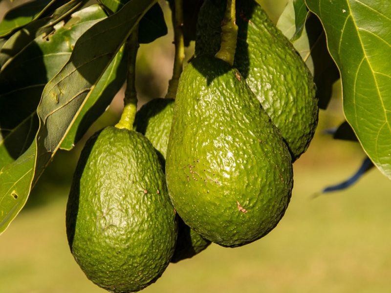 avocado exotic fruit box