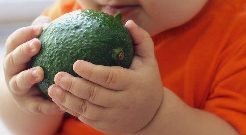 aguacate nutricion infantil exotic fruit box